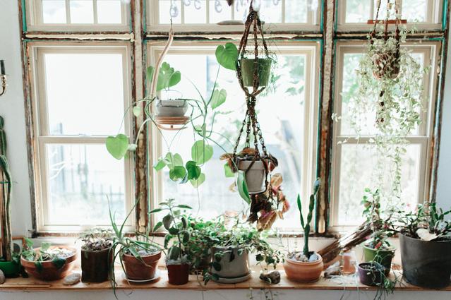 plant hoarding